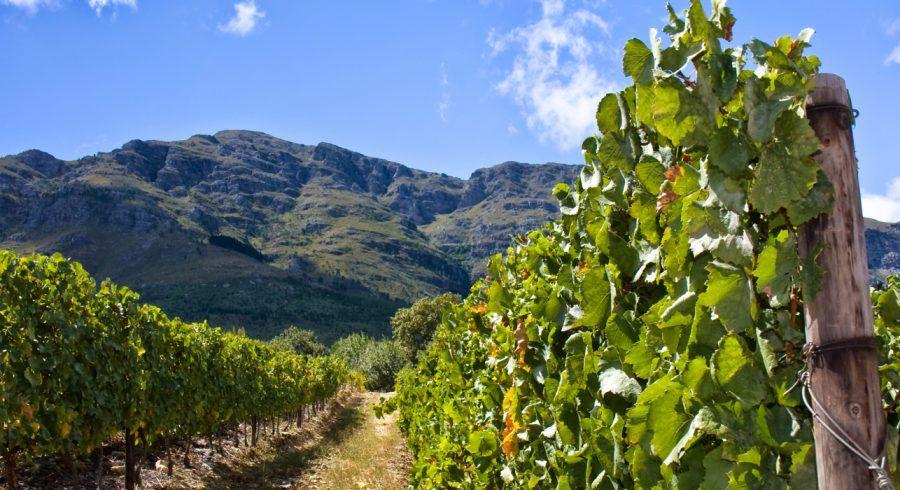 Stellenbosch & Franschhoek