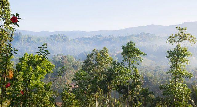 Der immergrüne Urwald Sinharaja, Sri Lanka