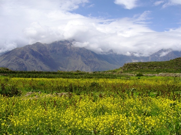 Peru - it's not just about Macchu Pichu - Colca Canyon. Image courtesy of Ingrid Vultorius