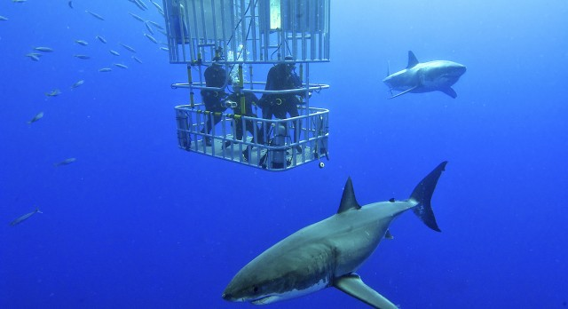 Shark cage diving in Namibia with Enchanting Travels