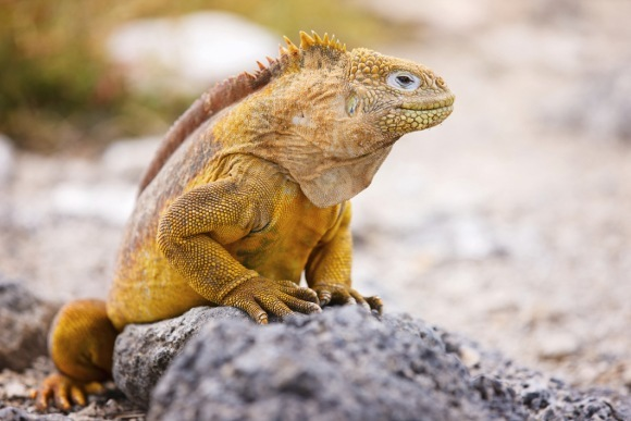 Cruise to the Galapagos Islands in Ecuador!