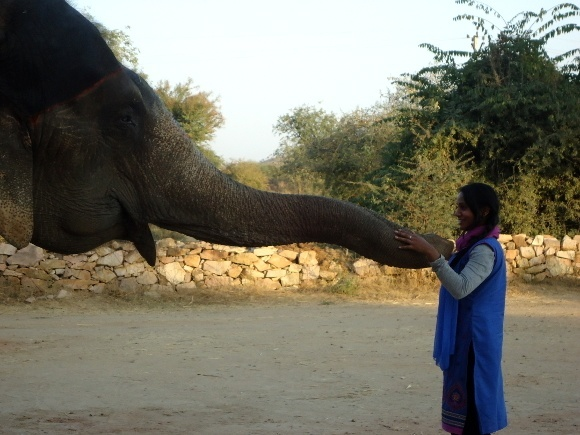 Sarah Tej says hello! Elephant Experiences in Jaipur, India