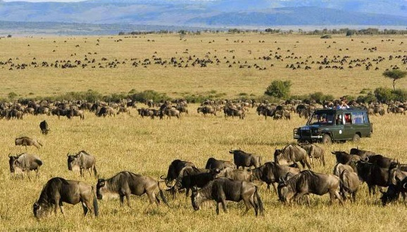 Africa Trips: Your Lowdown On The Great Migration