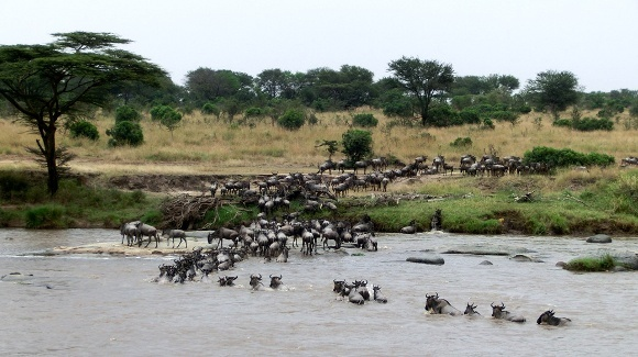 Great Migration Magic in the Serengeti