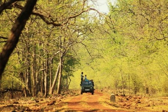 Tucked Away Wildlife in India: Introducing Tadoba