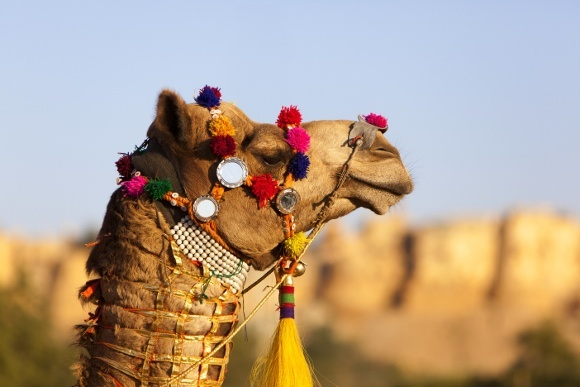 Festival of Folk Art, Rajasthan