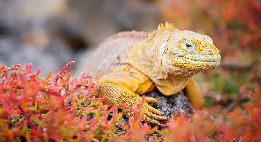 Tierreisen zu den Galapagos Inseln