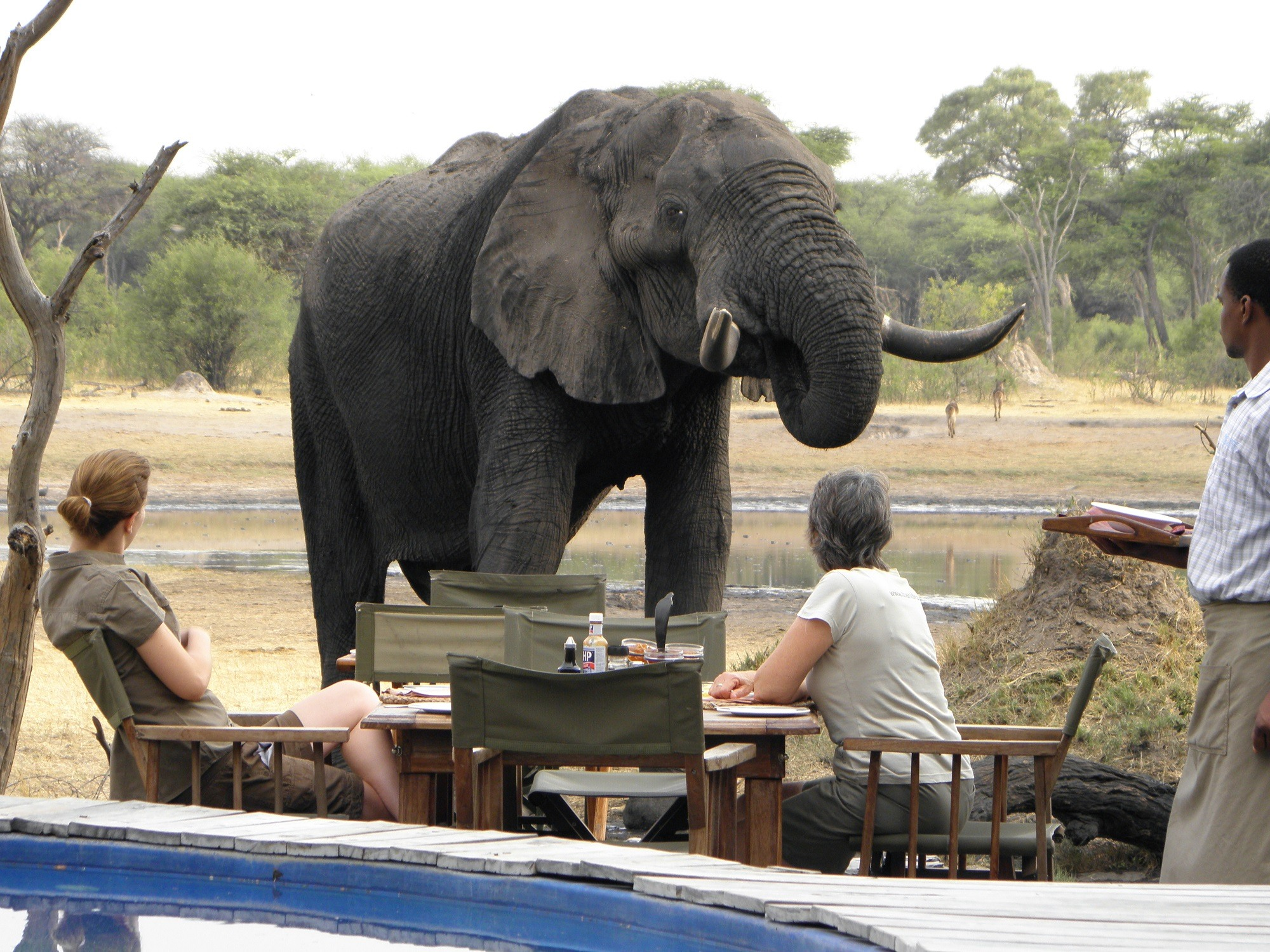 The Best Ever Luxury Safari Tours in Zimbabwe for you