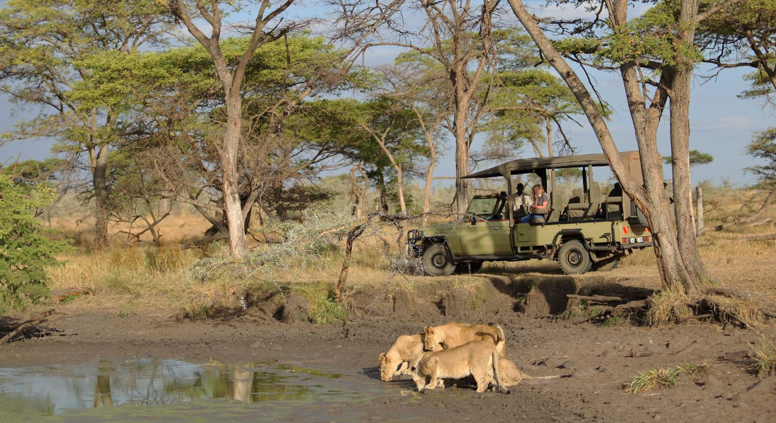 Meet Simba and friends on a 'Lion King' inspired African Safari